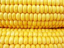 Golden corn cobs Stock Photo