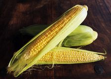 Golden Corn Composition Royalty Free Stock Photo