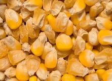 Golden corn grains Stock Image