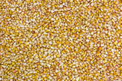 Golden Corn Royalty Free Stock Photo
