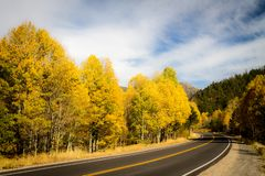 Golden Corralled Aspens Encircled by Roadway. The Carson Pass Highway encircles an aspen grove in autumn gold. Picketts Junction, California, USA royalty free stock photography