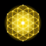 Golden Cosmic Flower of Life With Stars on Black Background Stock Photo