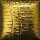 Golden crocodile leather stock photo