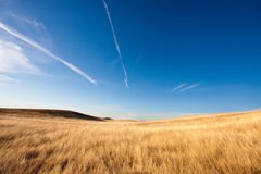 Golden crops and blue sky Royalty Free Stock Images