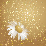Golden daisy background Royalty Free Stock Images