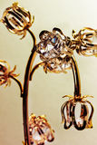 Golden decorative flowers  on the white background Royalty Free Stock Photo