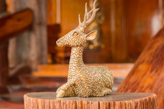 Golden deer spider on the timber. Stock Images