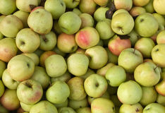 Golden delicious Royalty Free Stock Photography