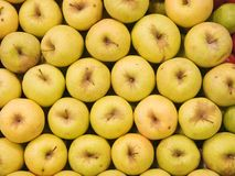 Golden Delicious Apples Royalty Free Stock Image