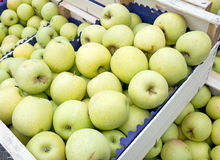 Golden delicious green apples in boxes, market, wholesale. Royalty Free Stock Photography