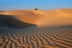 Golden Desert Royalty Free Stock Photography