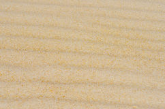 Golden desert or sandy beach wavy grain texture Stock Image