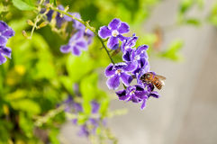 Golden dewdrop flowers and bee Royalty Free Stock Photos
