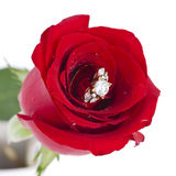 Golden diamond ring and rose. Valentine Series Stock Images