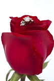 Golden diamond ring and rose. Valentine Series Stock Image