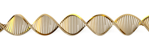 Golden DNA Helix. 3D rendered double Helix / DNA royalty free illustration