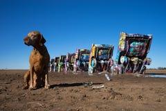 Golden dog sitting at caddillac ranch amarillo texas Stock Photography