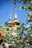 A Golden dome with a cross surrounded by spring flowers. On Apple Royalty Free Stock Photography