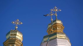The golden dome of the Orthodox Church sit two birds. Ukraine stock video footage