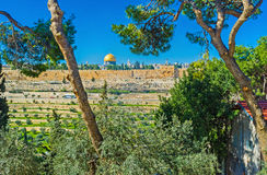 The golden dome. The view through the greenery of garden, surrounding the Russian Orthodox Church of Mary Magdalene, on the Dome of the Rock and ramparts of royalty free stock photos