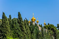 Golden domes Church of St. Mary Magdalen. In Gethsemane. Russian Orthodox Church in East Jerusalem. Cypress Alley. The concept of historical, religious and stock photo