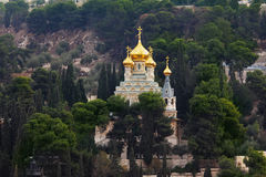 Golden domes and cypresses Stock Images