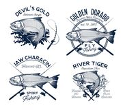 Golden Dorado Fishing Logo. Vector Illustration. Stock Images