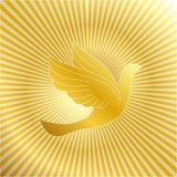 Golden dove with gold background Stock Photography