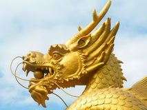 Golden dragon head. Head of the golden dragon statute in Phuket, Thailand Stock Images