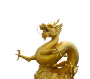 Golden dragon in white background Royalty Free Stock Images
