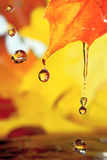 Golden drops Royalty Free Stock Photos