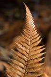 Golden dry fern royalty free stock image