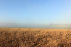Golden dry grasses and mist in a winter landscape Stock Photos