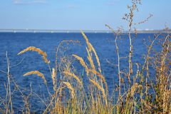 Golden dry herbs in windy day on the background of blue river stock photo