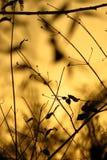 Golden Dryland Vegatation Stock Photo