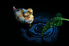 Golden duck and water ripples Stock Photography