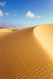 Golden dune and blue sky 1. A golden dune at the desert of Fuerteventura stock images