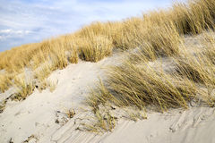 Golden Dune grass on the Baltic Sea Royalty Free Stock Images