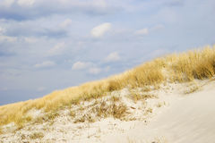 Golden Dune grass on the Baltic Sea Stock Photo