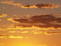 Golden dusk Stock Photography