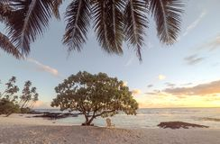 Golden dusk sun light at sunset on beautiful empty tropical beac. H with deckchair and palm tree fronds at Lefaga, Matautu, Upolu Island, Western Samoa, South Royalty Free Stock Image