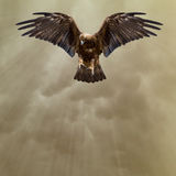 Golden eagle in the dark stormy sky Stock Image