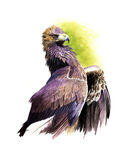 Golden eagle. Wild Golden eagle watercolor painting Stock Photo