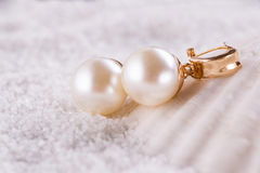 The golden earrings and sea shell Stock Image