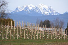 Golden Ears Mountain Range Stock Images
