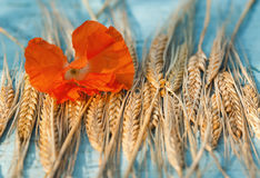 Golden ears of wheat and red poppy flower lying on wooden table. Golden ears of wheat and red poppy flower lying on old wooden table royalty free stock photography