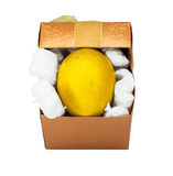 Golden easter egg in a gift box. Stock Images