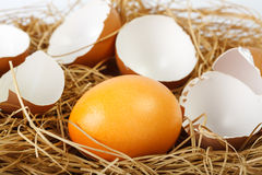 Golden easter egg and shells Stock Images
