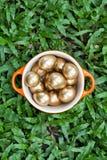 Golden easter eggs. Royalty Free Stock Photos
