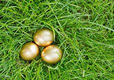 Golden easter eggs on the green grass Royalty Free Stock Image